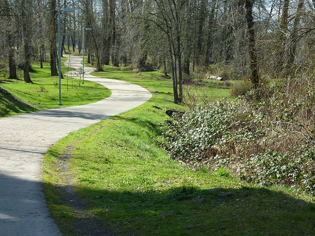 A windy path on a park